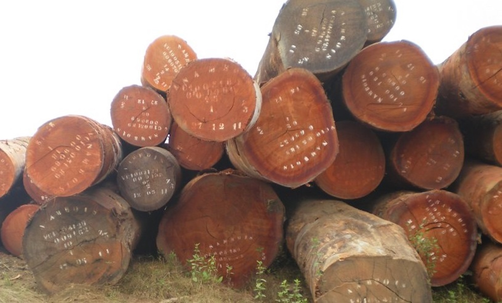 1.-Padoek-logs